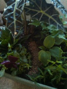 Build a Mini Minecraft Forest from Albuquerque Moms Blog
