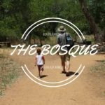 Paseo del Bosque: a day trip in Albuquerque