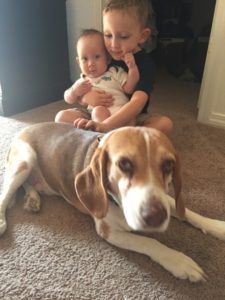 New Baby Meets Fur Baby::How to Ease the Transition for Your Pup from Albuquerque Moms Blog