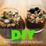 DIY Miniature Succulent Terrarium: A Fun, Easy and Inexpensive Gift Idea