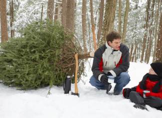 cut tag your own christmas tree