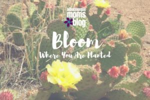 Bloom Where You Are Planted - Albuquerque Moms Blog