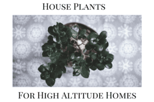 House Plants for High Altitude Homes