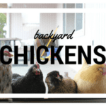 Backyard Chickens :: Fun for the Whole Family!