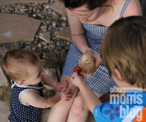 backyard chickens. Albuquerque Moms Blog