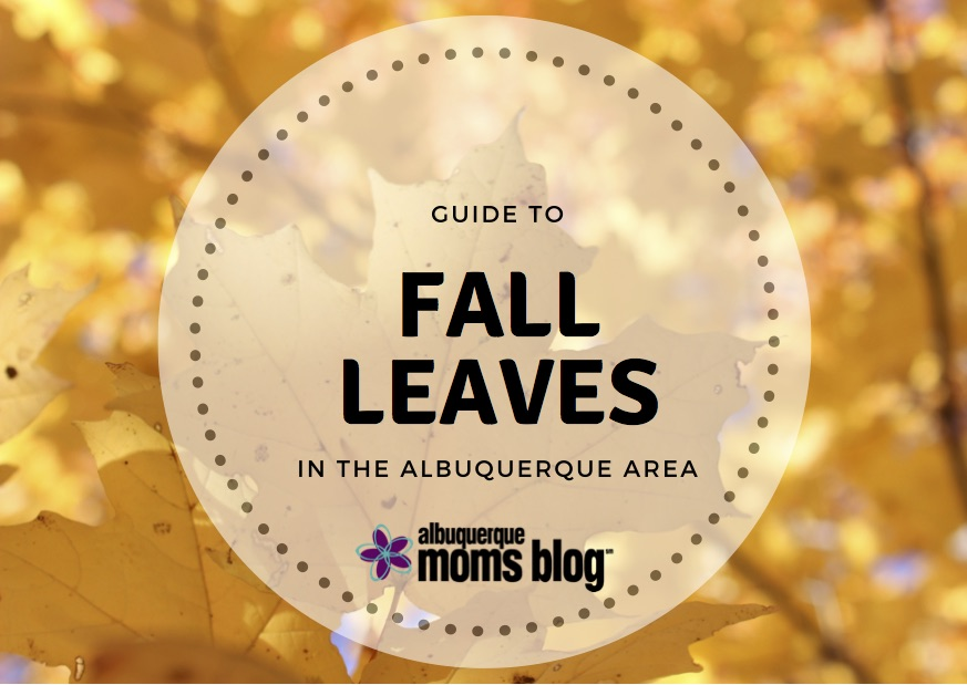 fall leaves | Albuquerque Moms Blog