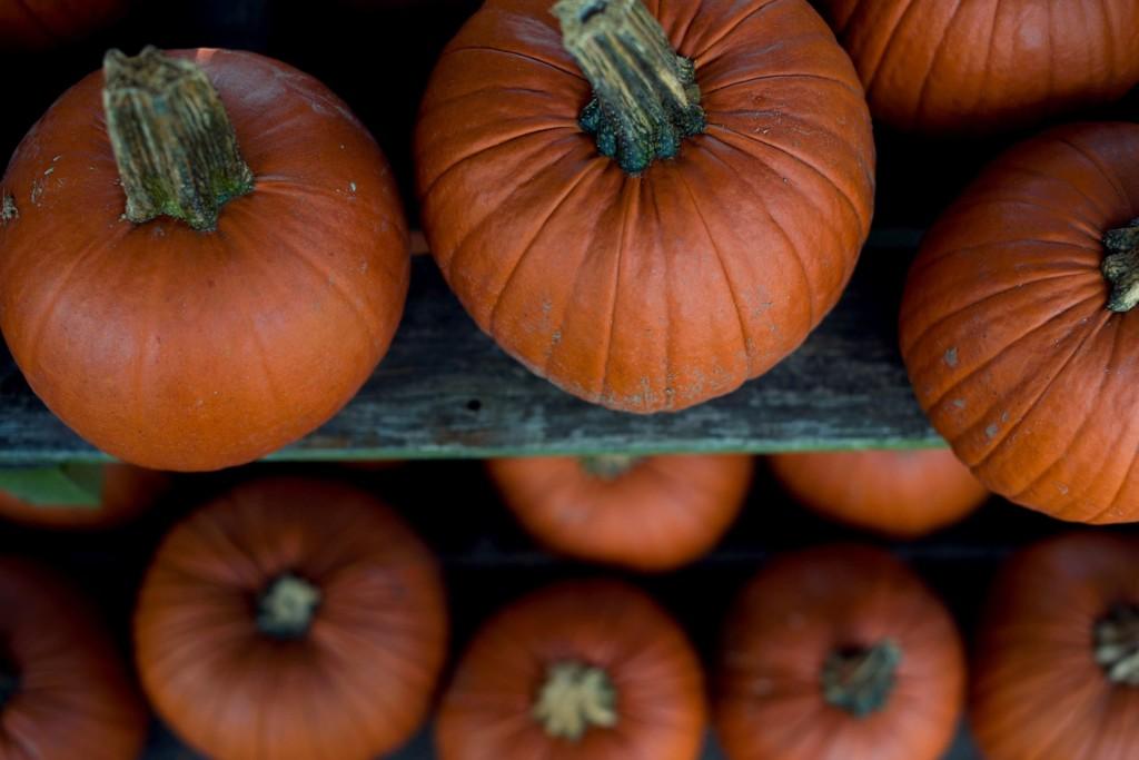 pumpkins | Albuquerque Moms Blog