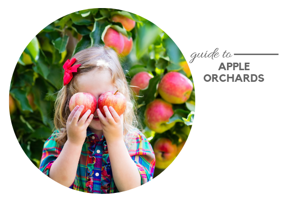 Guide to Apple Orchards