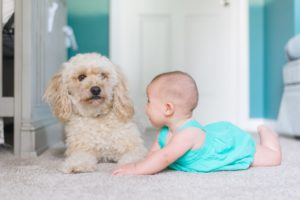 Dog and child safety, Albuquerque Moms Blog