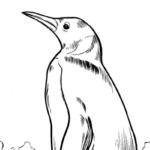 Enter Our Penguin Chill Coloring Contest!