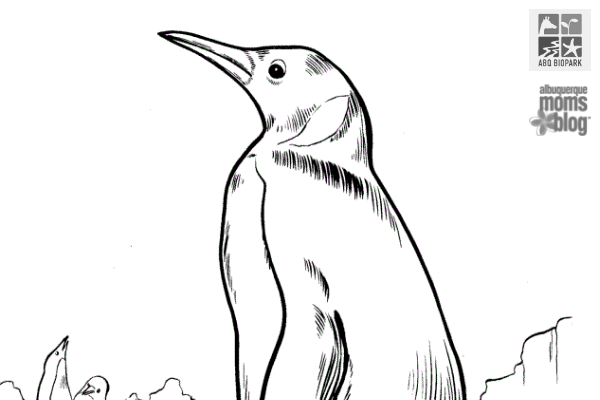 penguin chill, coloring contest, abq biopark, zoo, albuquerque moms blog