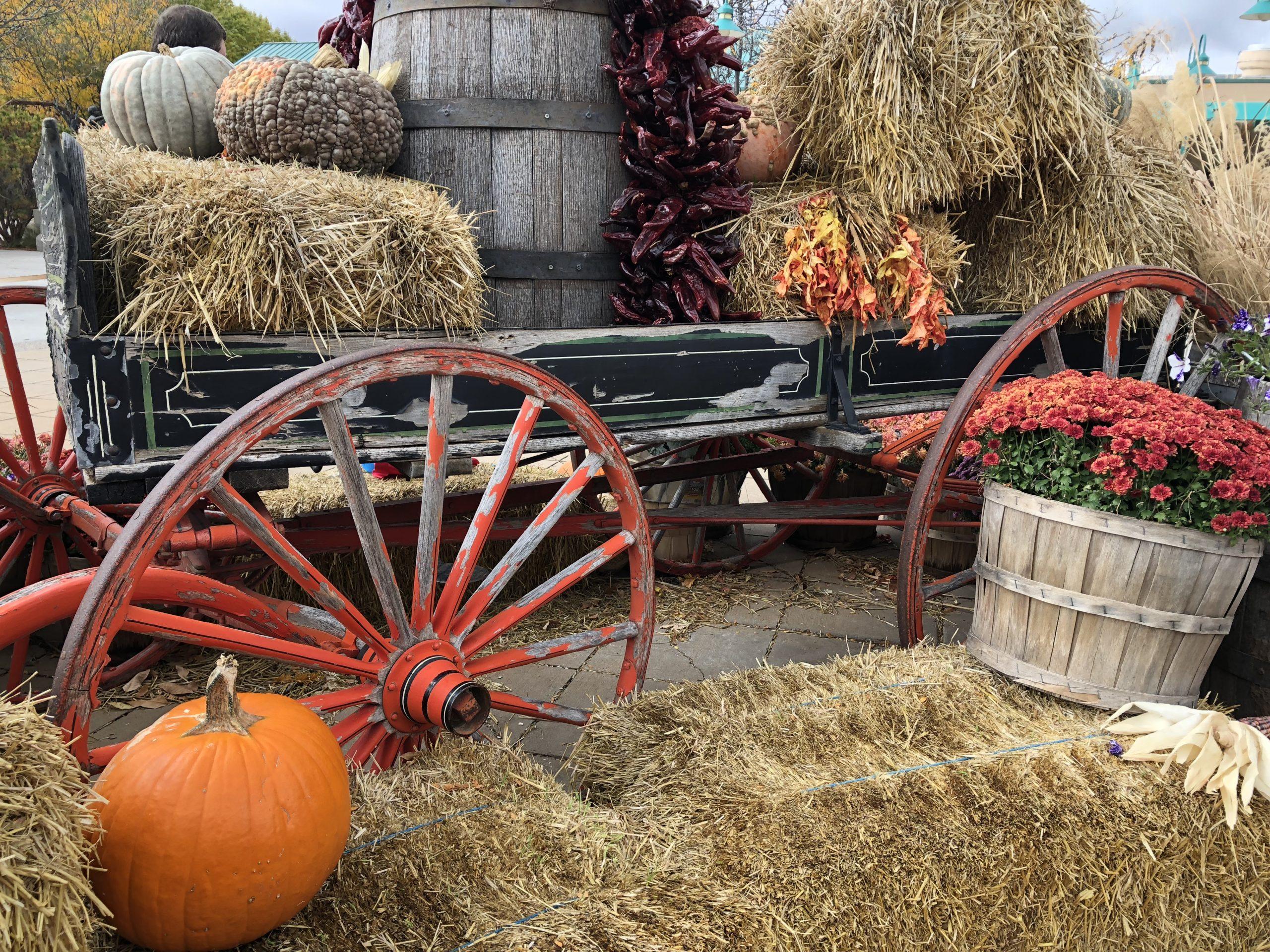 pumpkins, fall in Albuquerque
