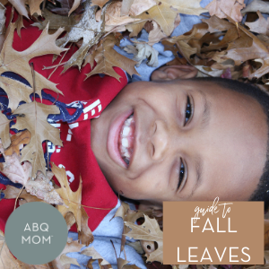 Guide to Fall Leaves