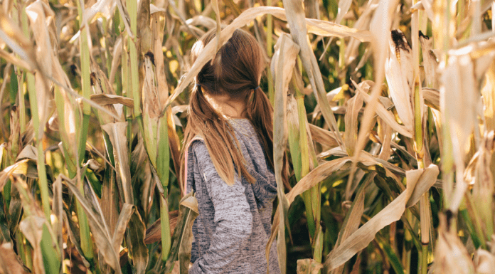 Guide to Corn Mazes