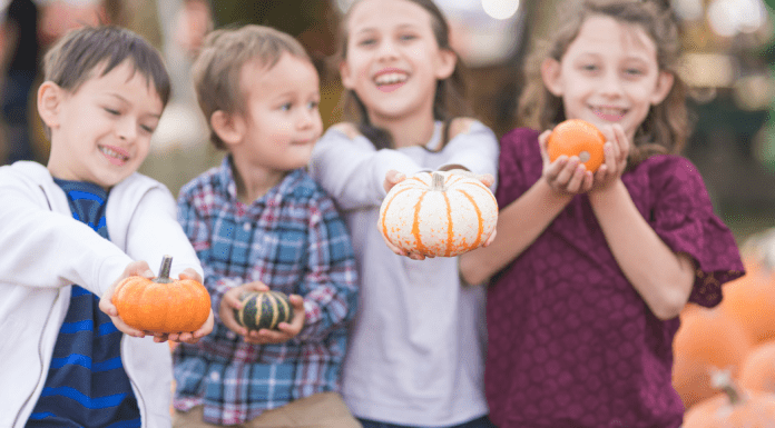 Guide to Pumpkin Patches