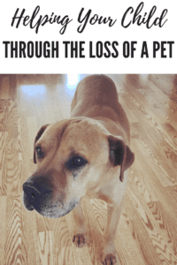 Helping a Child Through the Loss of a family pet, ABQ Moms