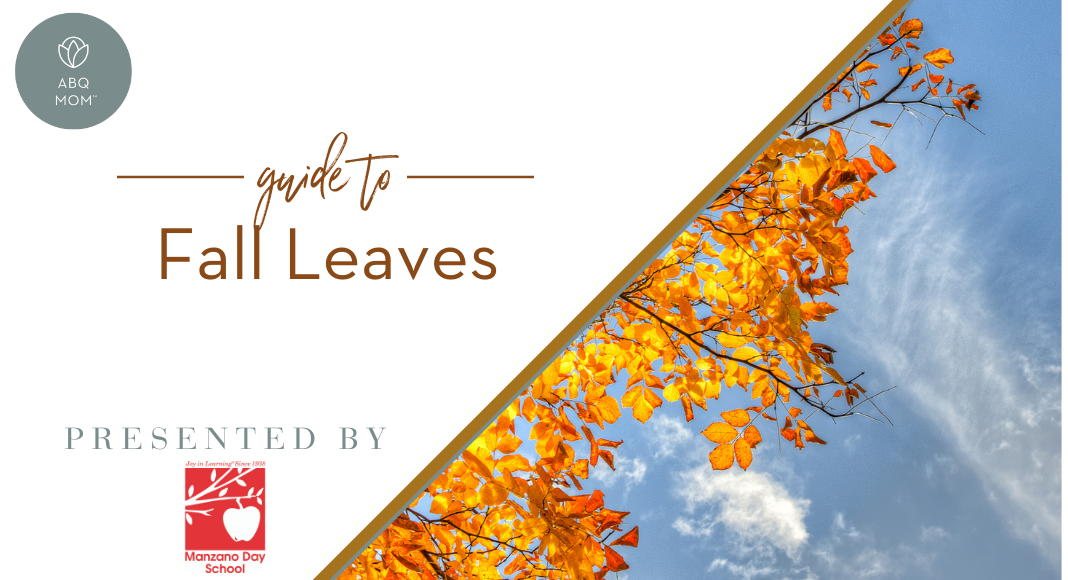 fall leaves, albuquerque, New Mexico