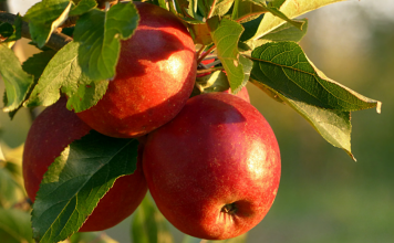Guide to Apple Orchards in the Albuquerque Area