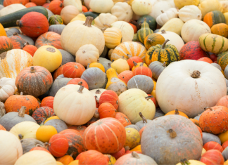 Guide to Pumpkin Patches in the Albuquerque Area