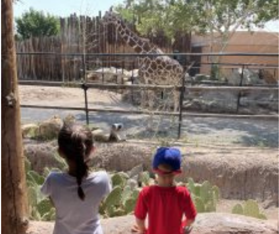 Impress Your Family with These Fun Animal Facts on Your Next Zoo Trip!